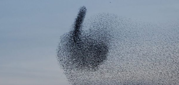 starlings_finger