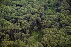 An aerial view of rainforest.
